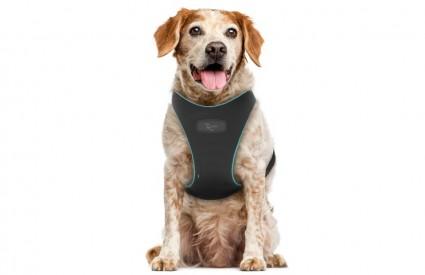 Pratite zdravlje svog psa mobitelom?!