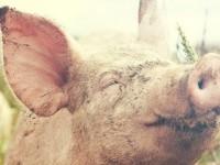 Aktivno zalaganje za dobrobit životinja u EU