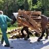 Sramotno mučenje konja u Zagrebu