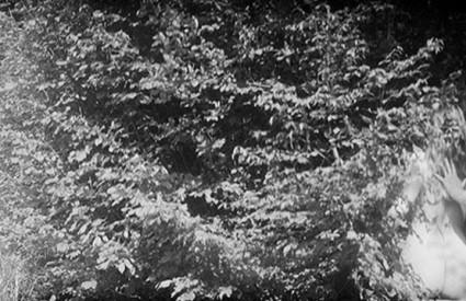 Črna šuma, bele babe