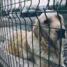 Udruge na udaru veterinarske inspekcije