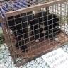 Zlostavljanje životinja na tržnicama