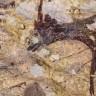 Najstariji pećinski prikaz lova otkriven u Indoneziji