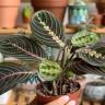7 biljaka za svaki ured