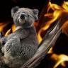 U australskim požarima stradalo gotovo tri milijarde životinja