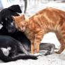 Koje životinje imaju najveći rizik od zaraze