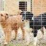 Sedam savjeta za brigu o kućnim ljubimcima tijekom pandemije virusa COVID-19