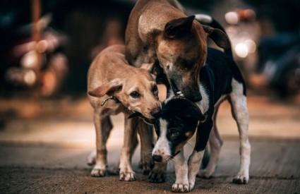 Previše pasa nije cijepljeno