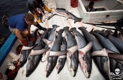 Ne smiju nestati morski psi