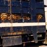 Međunarodni dan zabrane transporta živih životinja