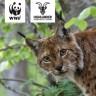 WWF & HIGHLANDER